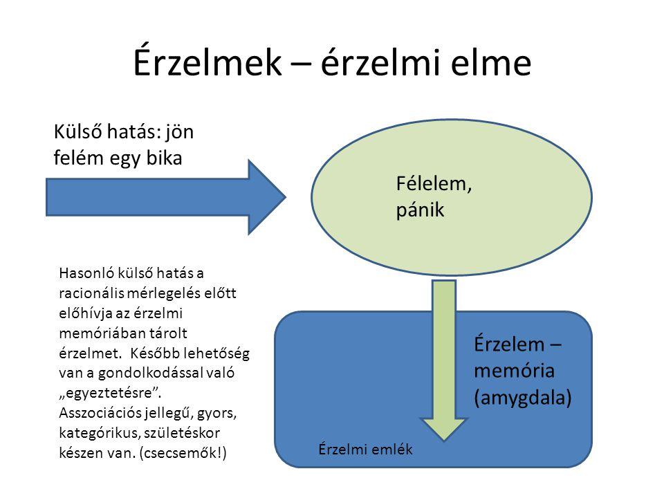 Amygdala: az érzelemmemória helye Hippocampus: A tények és ismeretek tárhelye (hosszú távú memória)