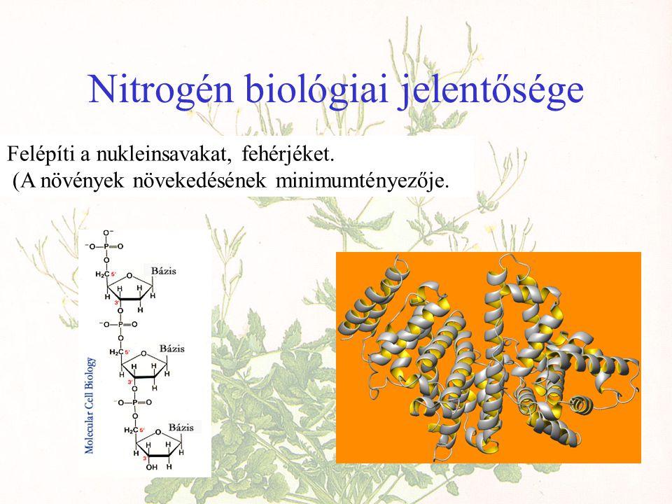 Nitrogén biológiai jelentősége Felépíti a nukleinsavakat, fehérjéket.