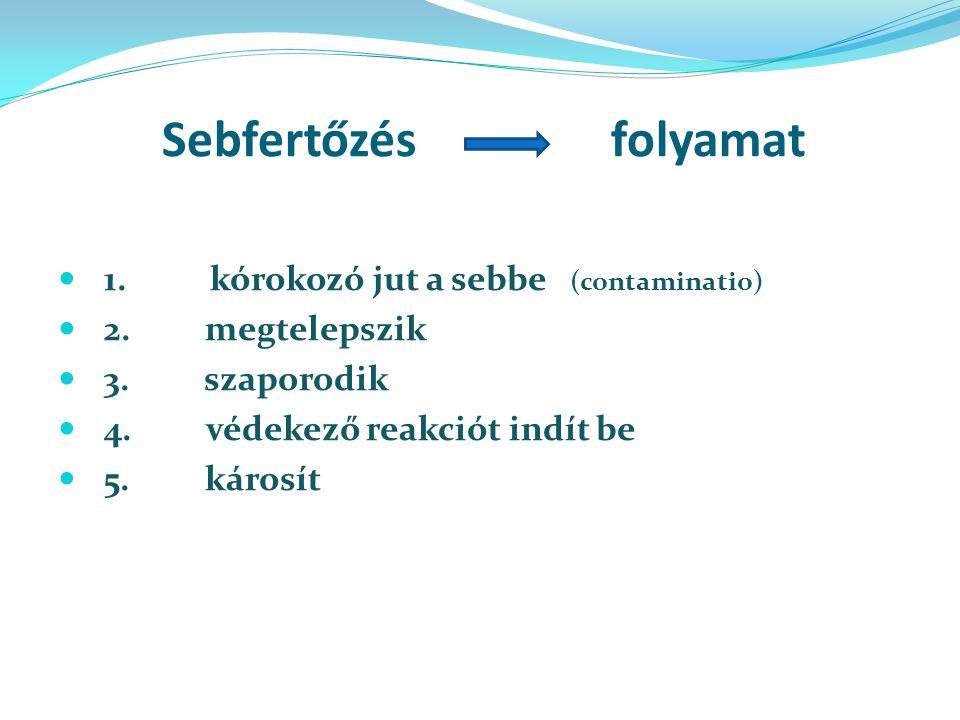 Sebfertőzés folyamat 1.kórokozó jut a sebbe (contaminatio) 2.