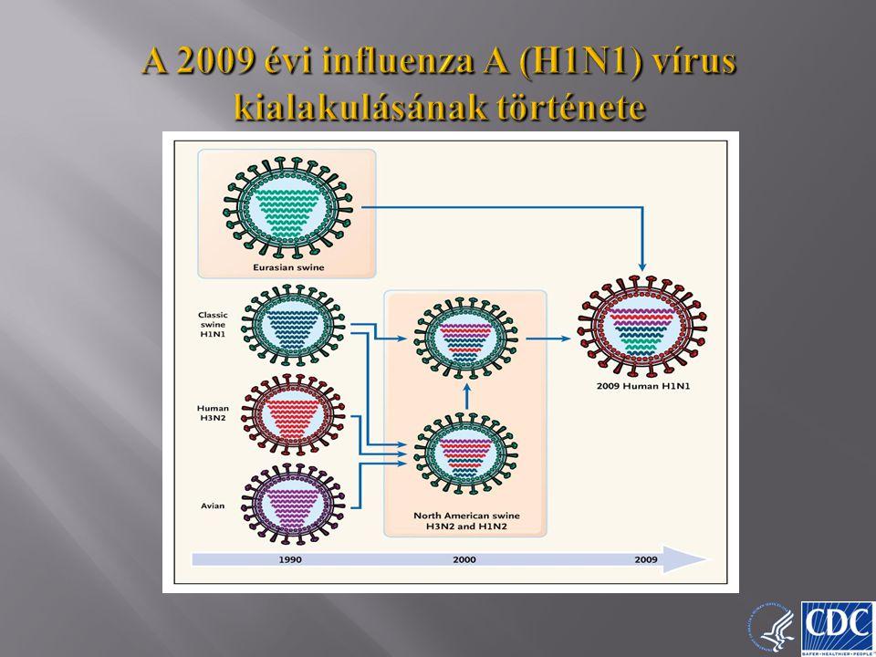 9 A 2009 évi influenza A (H1N1) vírus kialakulásának története