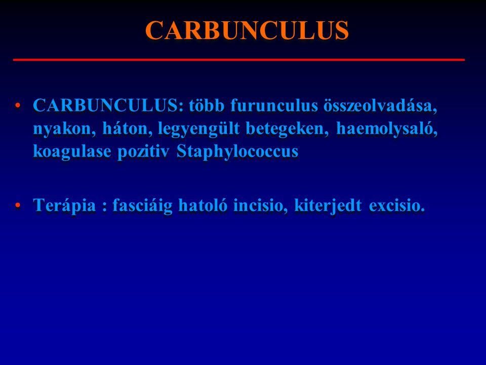 CARBUNCULUS: több furunculus összeolvadása, nyakon, háton, legyengült betegeken, haemolysaló, koagulase pozitiv Staphylococcus Terápia : fasciáig hato