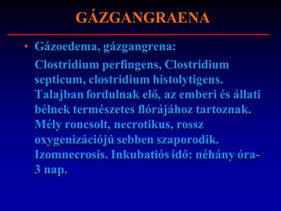 Gázoedema, gázgangrena: Clostridium perfingens, Clostridium septicum, clostridium histolytigens. Talajban fordulnak elő, az emberi és állati bélnek te
