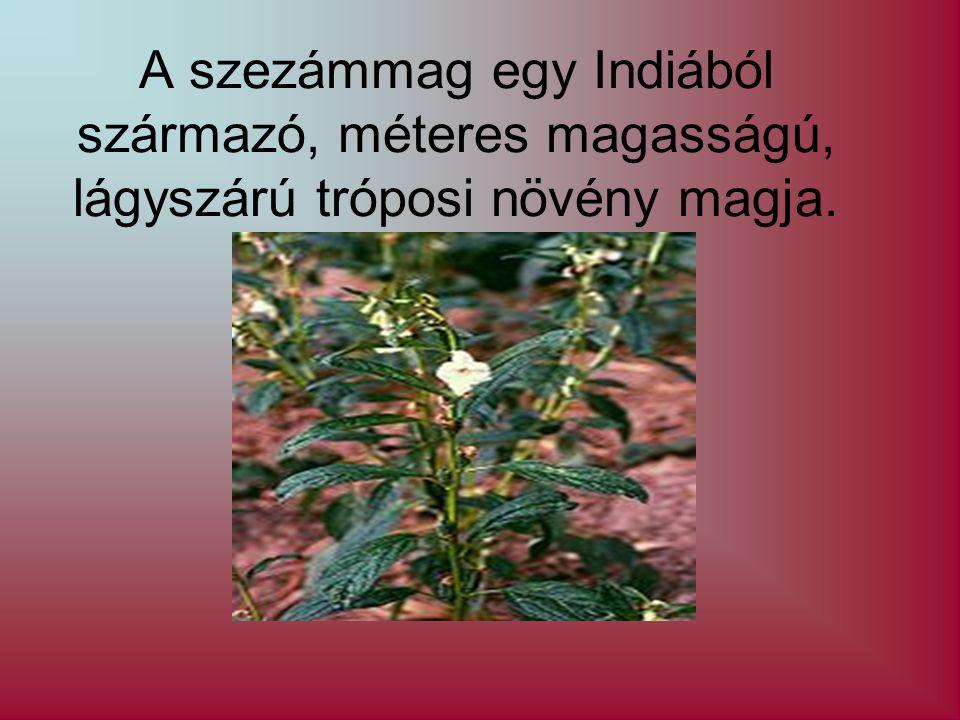 A szezámmag egy Indiából származó, méteres magasságú, lágyszárú tróposi növény magja.