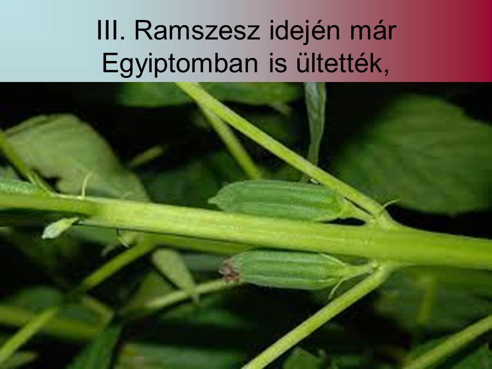 III. Ramszesz idején már Egyiptomban is ültették,