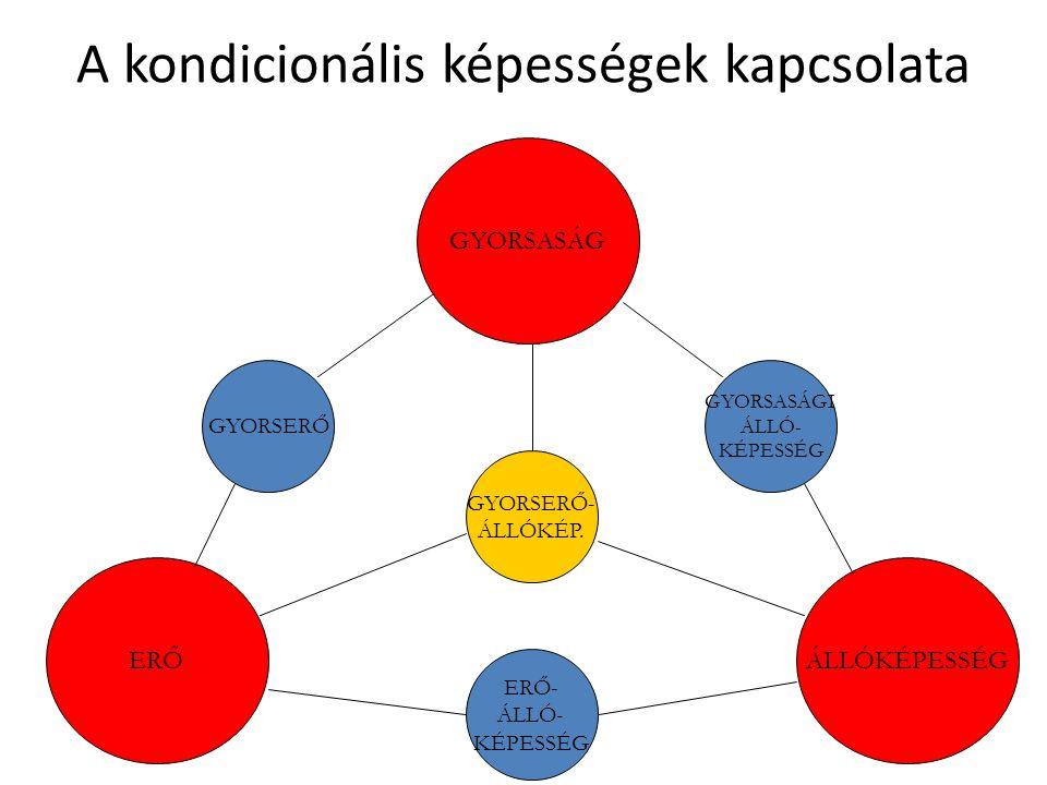 A kondicionális képességek kapcsolata GYORSERŐ GYORSASÁGI ÁLLÓ- KÉPESSÉG ERŐ- ÁLLÓ- KÉPESSÉG GYORSASÁG ERŐÁLLÓKÉPESSÉG GYORSERŐ- ÁLLÓKÉP.