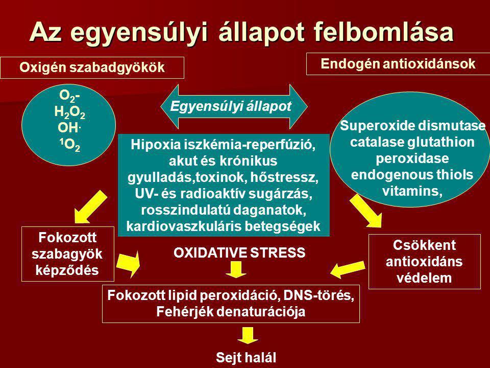 Oxigén szabadgyökök Endogén antioxidánsok O 2 - H 2 O 2 OH. 1 O 2 Superoxide dismutase catalase glutathion peroxidase endogenous thiols vitamins, Egye