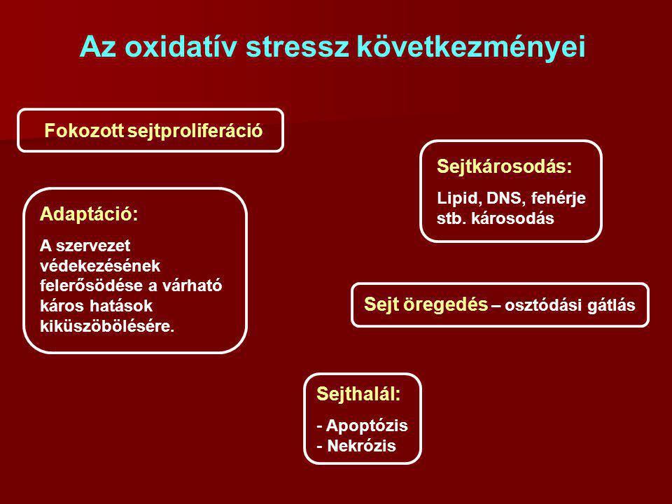 Az oxidatív stressz következményei Fokozott sejtproliferáció Adaptáció: A szervezet védekezésének felerősödése a várható káros hatások kiküszöbölésére.