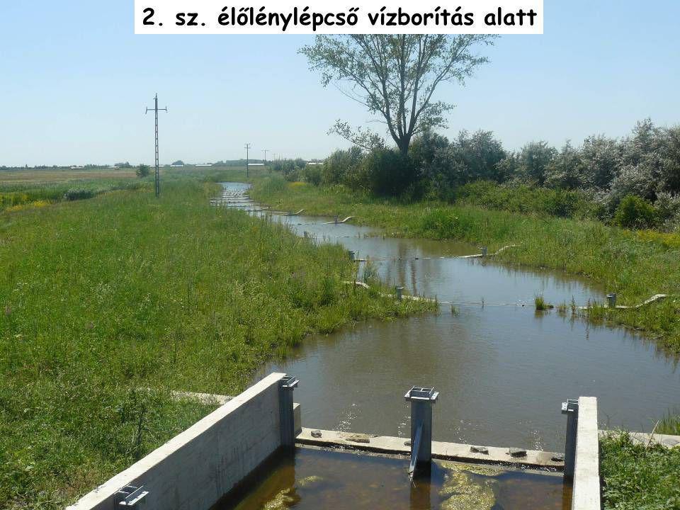 2. sz. élőlénylépcső vízborítás alatt