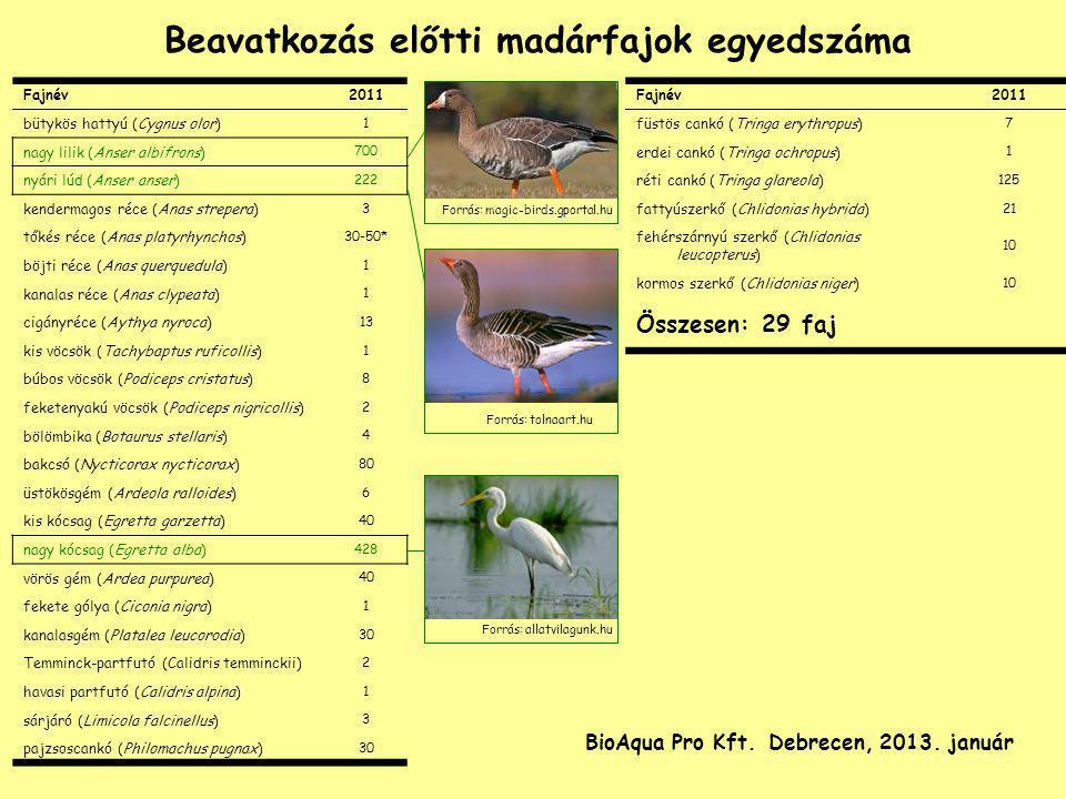 Fajnév2011 bütykös hattyú (Cygnus olor) 1 nagy lilik (Anser albifrons) 700 nyári lúd (Anser anser) 222 kendermagos réce (Anas strepera) 3 tőkés réce (
