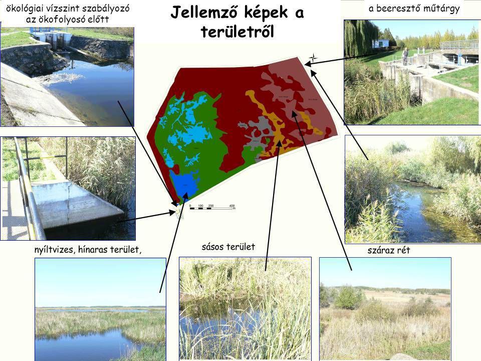 Jellemző képek a területről ökológiai vízszint szabályozó az ökofolyosó előtt a beeresztő műtárgy