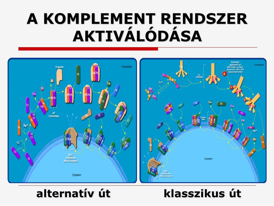 A KOMPLEMENT RENDSZER AKTIVÁLÓDÁSA alternatív út klasszikus út