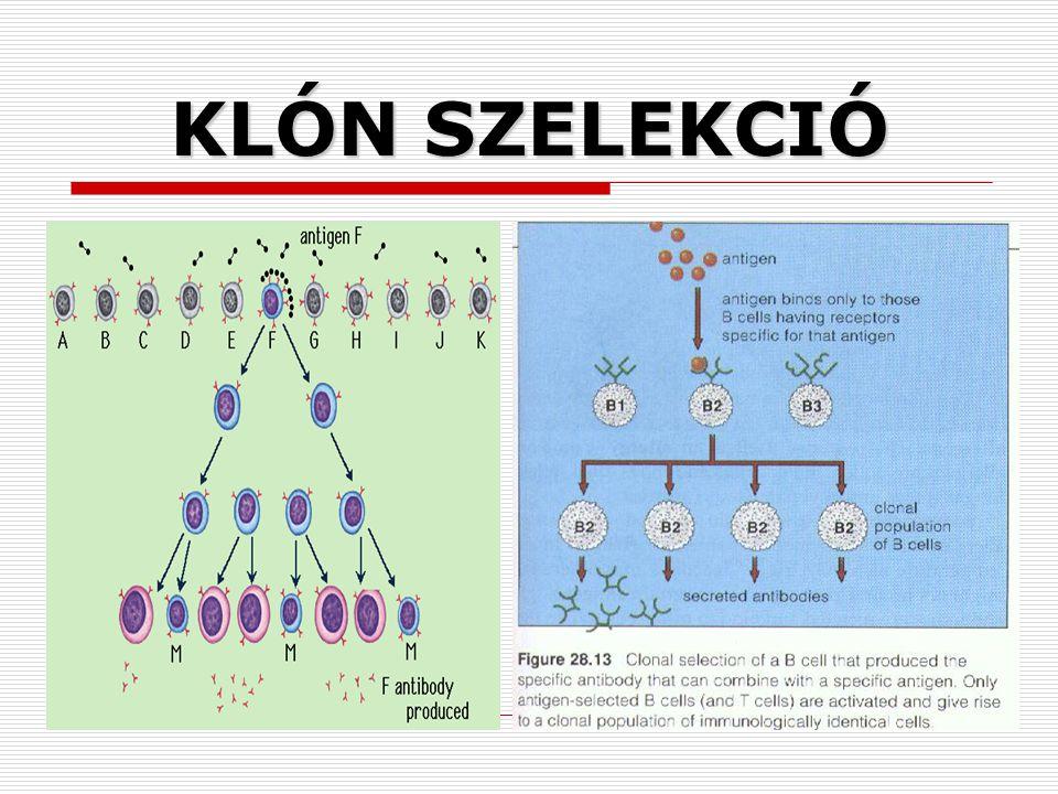 KLÓN SZELEKCIÓ