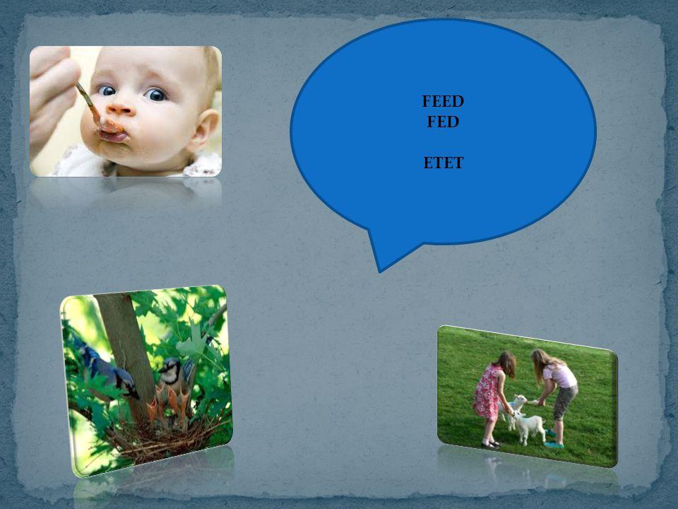FEED FED ETET