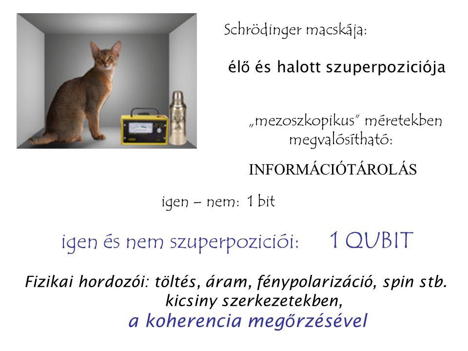 """Schrödinger macskája: él ő és halott szuperpoziciója """"mezoszkopikus méretekben megvalósítható: INFORMÁCIÓTÁROLÁS igen – nem: 1 bit igen és nem szuperpoziciói: 1 QUBIT Fizikai hordozói: töltés, áram, fénypolarizáció, spin stb."""
