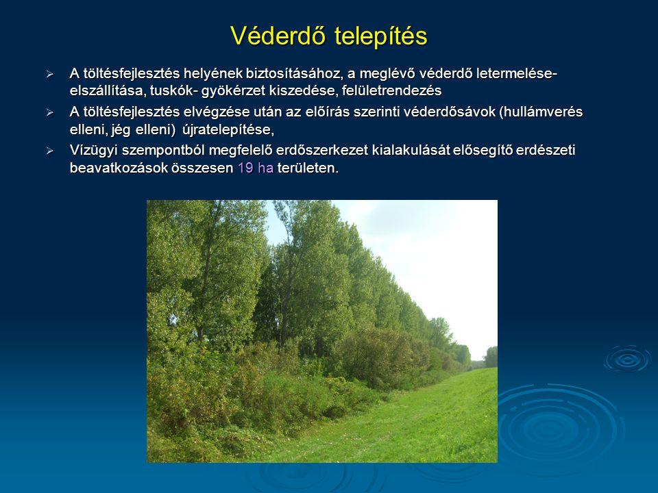 Véderdő telepítés  A töltésfejlesztés helyének biztosításához, a meglévő véderdő letermelése- elszállítása, tuskók- gyökérzet kiszedése, felületrende