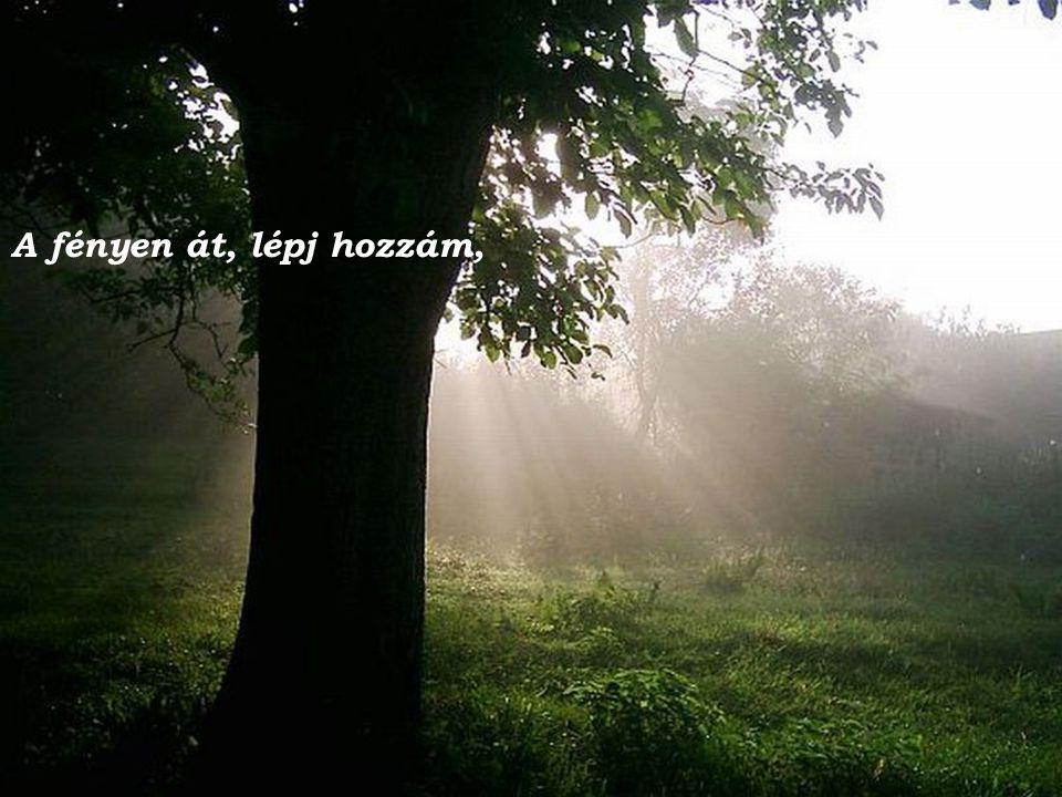 Építhetsz újra, építhetsz újra erdőt, folyót, élő hazát - Építsd fel újra, építsed újra a reménység templomát.