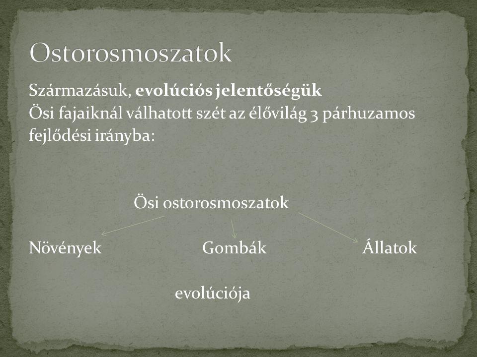 Származásuk, evolúciós jelentőségük Ősi fajaiknál válhatott szét az élővilág 3 párhuzamos fejlődési irányba: Ősi ostorosmoszatok Növények GombákÁllato