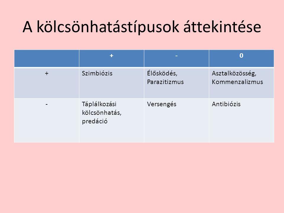 Szimbiózis Példák: Zuzmókban a moszatok és a gombák kapcsolata.