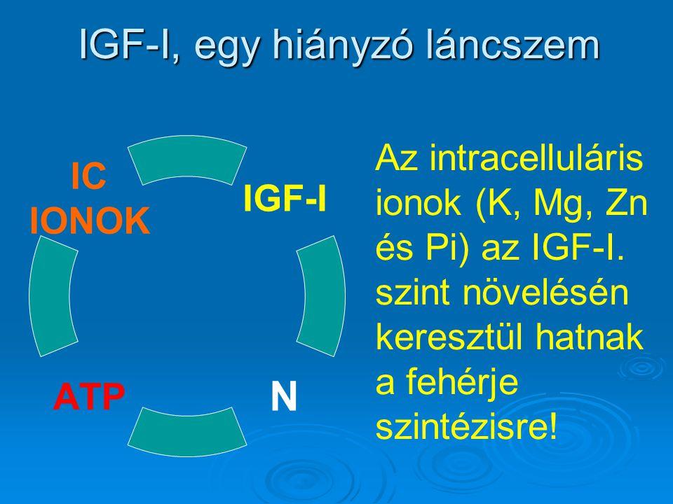 IGF-I, egy hiányzó láncszem Az intracelluláris ionok (K, Mg, Zn és Pi) az IGF-I. szint növelésén keresztül hatnak a fehérje szintézisre!
