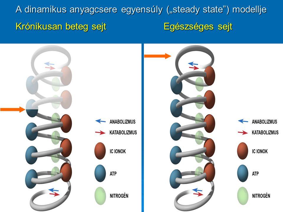 """A dinamikus anyagcsere egyensúly (""""steady state"""") modellje Krónikusan beteg sejt Egészséges sejt"""