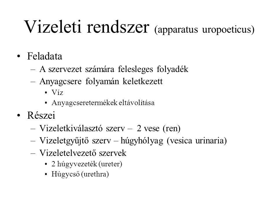 Vizeleti rendszer (apparatus uropoeticus) vesevese (vese) (húgyvezeték) (húgyhólyag) (húgycső)