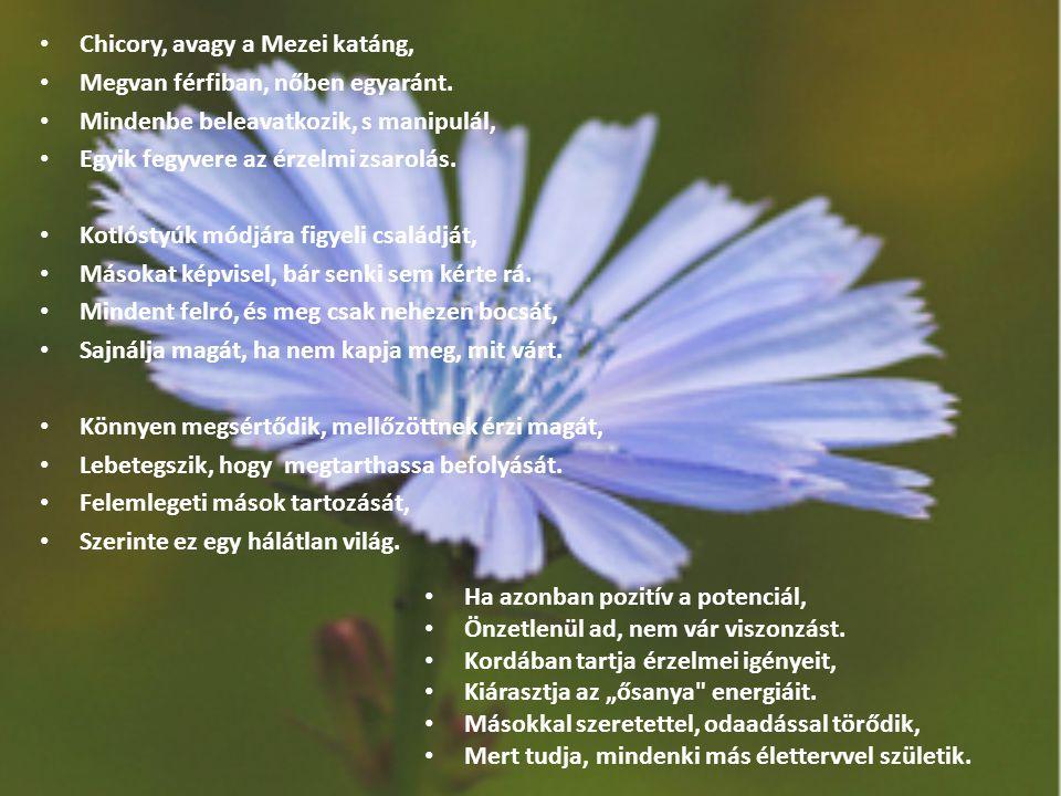Chicory, avagy a Mezei katáng, Megvan férfiban, nőben egyaránt. Mindenbe beleavatkozik, s manipulál, Egyik fegyvere az érzelmi zsarolás. Kotlóstyúk mó