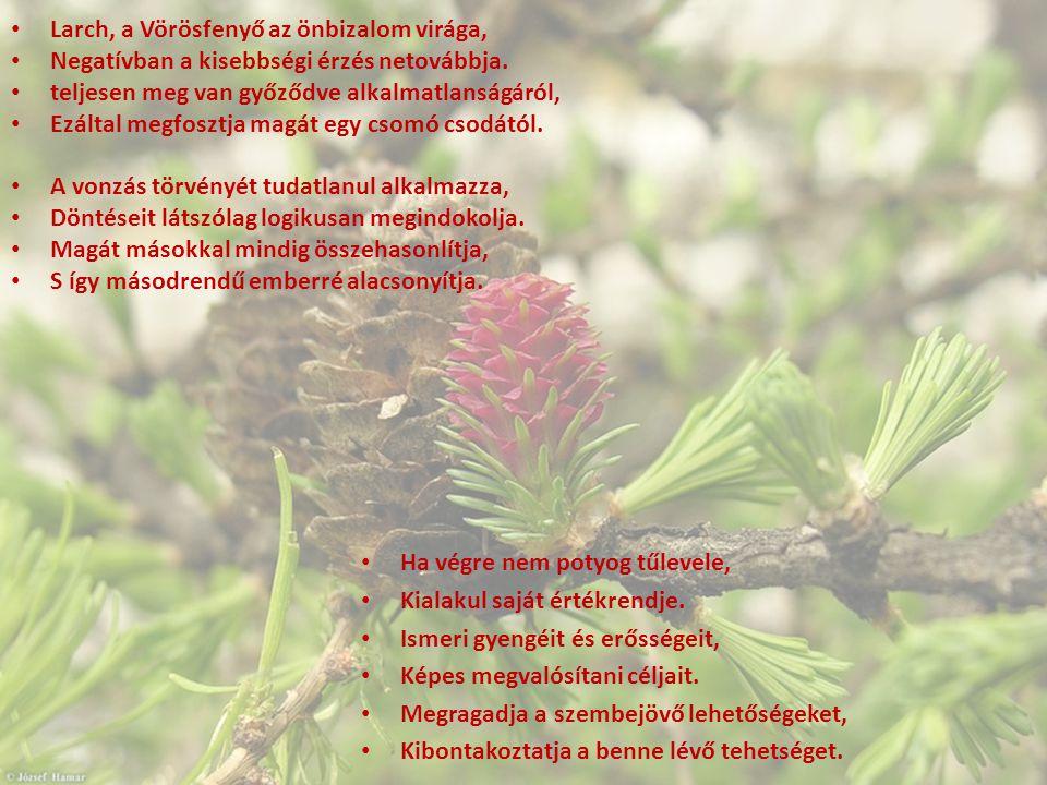 Larch, a Vörösfenyő az önbizalom virága, Negatívban a kisebbségi érzés netovábbja. teljesen meg van győződve alkalmatlanságáról, Ezáltal megfosztja ma