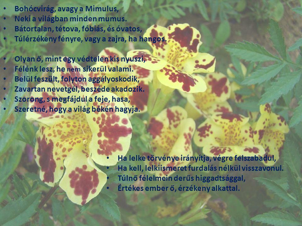 Bohócvirág, avagy a Mimulus, Neki a világban minden mumus. Bátortalan, tétova, fóbiás, és óvatos, Túlérzékeny fényre, vagy a zajra, ha hangos. Olyan ő
