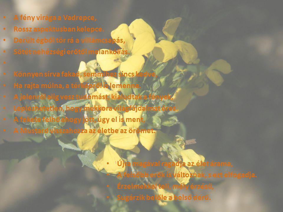 A fény virága a Vadrepce, Rossz aspektusban kelepce. Derült égből tör rá a villámcsapás, Sötét nehézségi erőtől melankóliás. Könnyen sírva fakad, semm