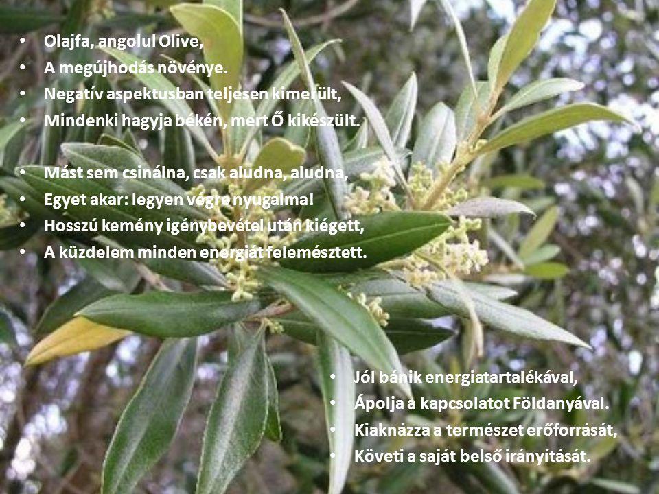 Olajfa, angolul Olive, A megújhodás növénye. Negatív aspektusban teljesen kimerült, Mindenki hagyja békén, mert Ő kikészült. Mást sem csinálna, csak a