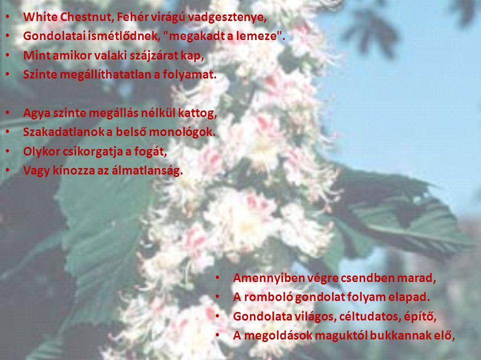 White Chestnut, Fehér virágú vadgesztenye, Gondolatai ismétlődnek,