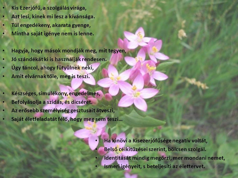 Kis Ezerjófű, a szolgálás virága, Azt lesi, kinek mi lesz a kívánsága. Túl engedékeny, akarata gyenge, Mintha saját igénye nem is lenne. Hagyja, hogy