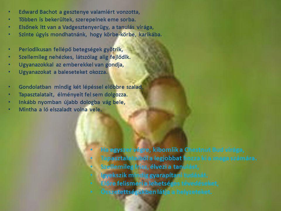 Chicory, avagy a Mezei katáng, Megvan férfiban, nőben egyaránt.