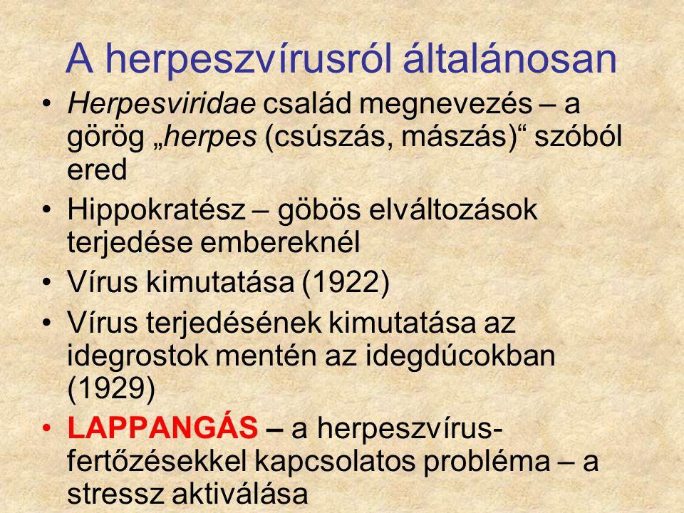 Az állatokat érintő legfontosabb herpeszvírusos fertőzések Szarvasmarha fertőző rhinotracheitise (BHV-1) Aujeszky-féle betegség (pseudorabies, SwHV-1) Lovak vírusos rhinopneumoniája (EHV-1 - 5) Marek-féle betegség (GaHV-2, GaHV-3) Sertések cytomegalovírus betegsége (SwHV-2) Baromfi fertőző laryngotracheitise (GaHV- 1)