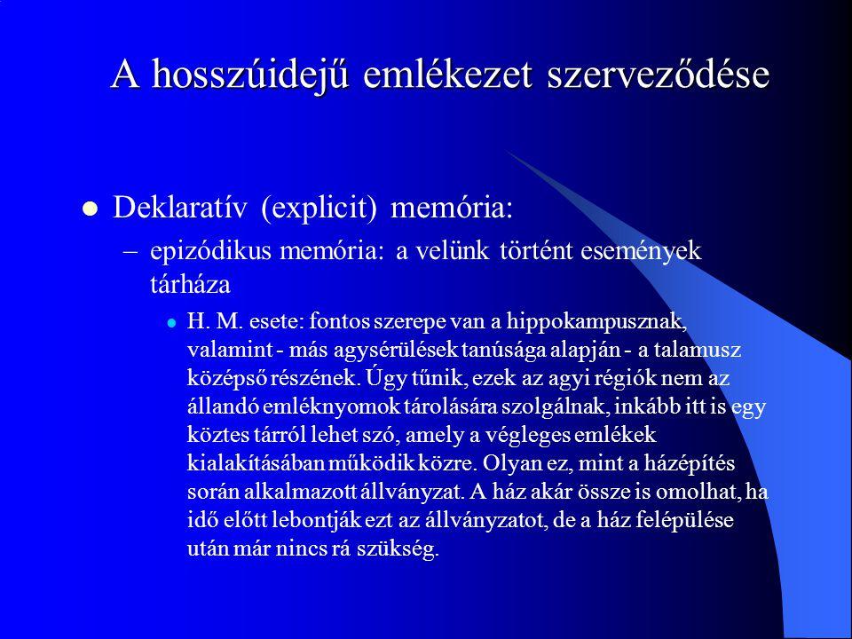 A hosszúidejű emlékezet szerveződése Deklaratív (explicit) memória: –epizódikus memória: a velünk történt események tárháza H. M. esete: fontos szerep