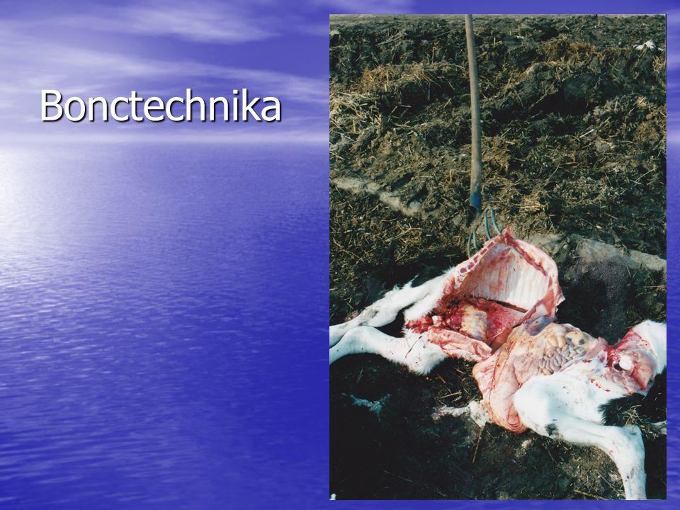 Bonctechnika