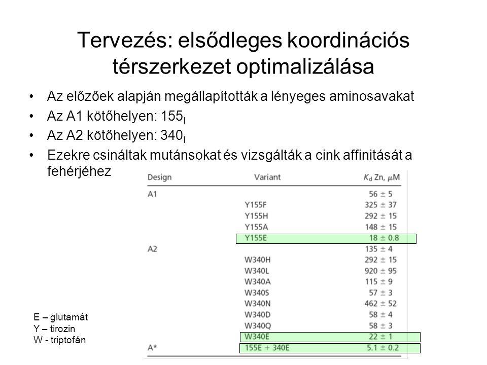 Az előzőek alapján megállapították a lényeges aminosavakat Az A1 kötőhelyen: 155 I Az A2 kötőhelyen: 340 I Ezekre csináltak mutánsokat és vizsgálták a cink affinitását a fehérjéhez Tervezés: elsődleges koordinációs térszerkezet optimalizálása E – glutamát Y – tirozin W - triptofán