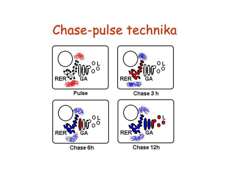 Chase-pulse technika