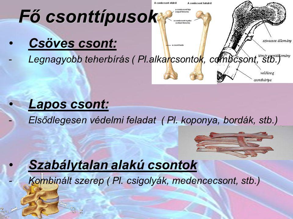 Fő csonttípusok Csöves csont: -Legnagyobb teherbírás ( Pl.alkarcsontok, combcsont, stb.) Lapos csont: -Elsődlegesen védelmi feladat ( Pl. koponya, bor