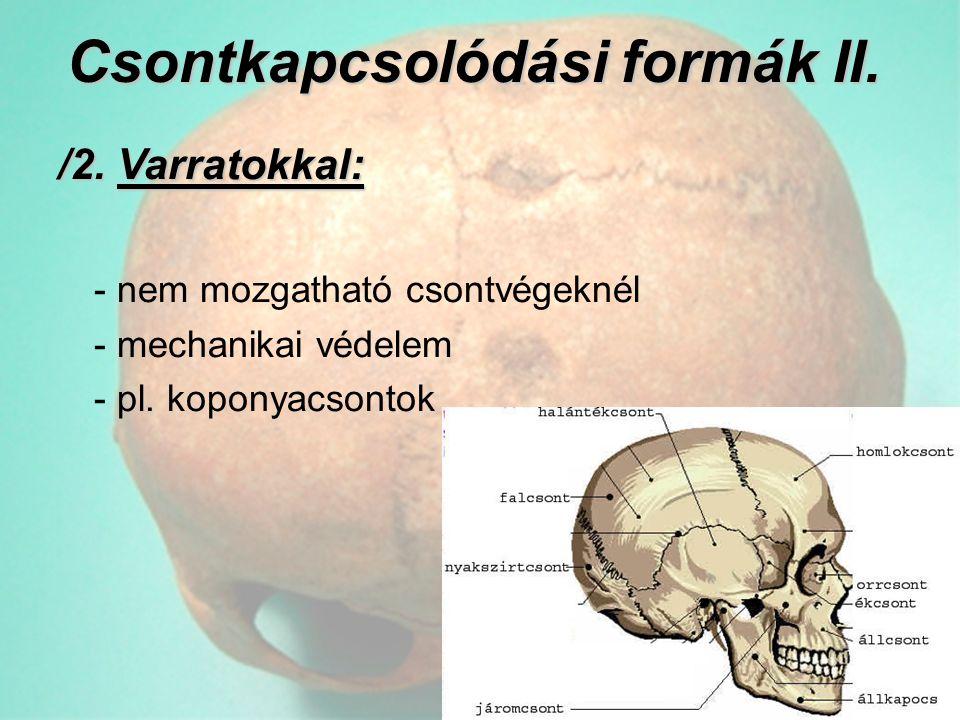 Csontkapcsolódási formák II. /2. Varratokkal: - nem mozgatható csontvégeknél - mechanikai védelem - pl. koponyacsontok