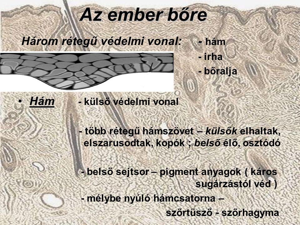 Az ember bőre Három rétegű védelmi vonal:- hám - irha - bőralja HámHám - külső védelmi vonal - több rétegű hámszövet – külsők elhaltak, elszarusodtak,
