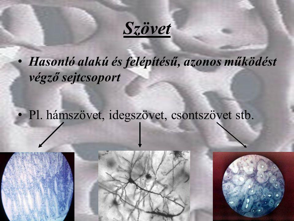 Szövet Hasonló alakú és felépítésű, azonos működést végző sejtcsoport Pl. hámszövet, idegszövet, csontszövet stb.