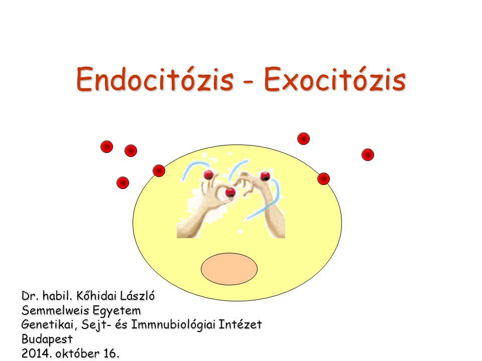 Proteasoma Proteinek nem-lizoszómális bontásaProteinek nem-lizoszómális bontása hengeres, multienzim komplexhengeres, multienzim komplex részei: ATP-kötő-, szubsztrát-kötő-, szabályozó- domainrészei: ATP-kötő-, szubsztrát-kötő-, szabályozó- domain elhelyezkedés: közel az ER-translocon külső részéhezelhelyezkedés: közel az ER-translocon külső részéhez ubiquitin - degradációs-szignál - elengedhetetlenubiquitin - degradációs-szignál - elengedhetetlen nem megfelelően hajtogatott vagy sérült fehérjék bontásanem megfelelően hajtogatott vagy sérült fehérjék bontása szabályozó - elimináló - szerep ld.