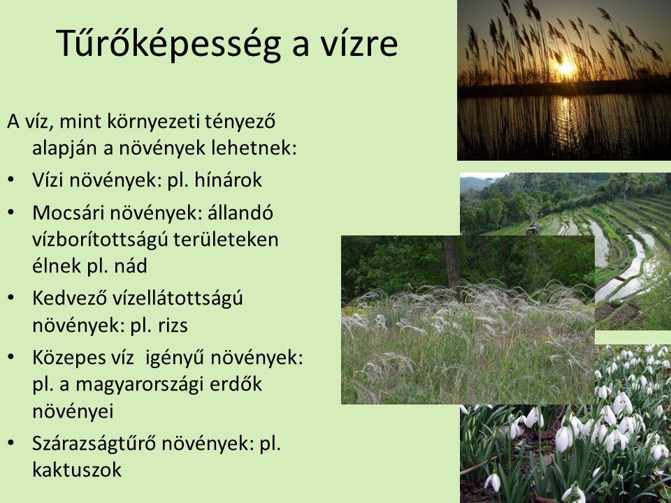 Tűrőképesség a vízre A víz, mint környezeti tényező alapján a növények lehetnek: Vízi növények: pl. hínárok Mocsári növények: állandó vízborítottságú