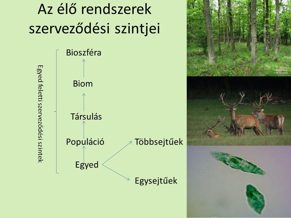 Környezet Definíció Csoportosítás Élettelen: 1.Fény 2.Hő 3.Levegő 4.Víz 5.Talaj Élő Populáción belüli hatások Populáción kívüli hatások