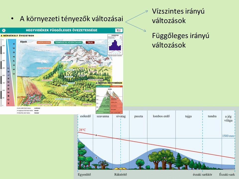 A környezeti tényezők változásai Vízszintes irányú változások Függőleges irányú változások