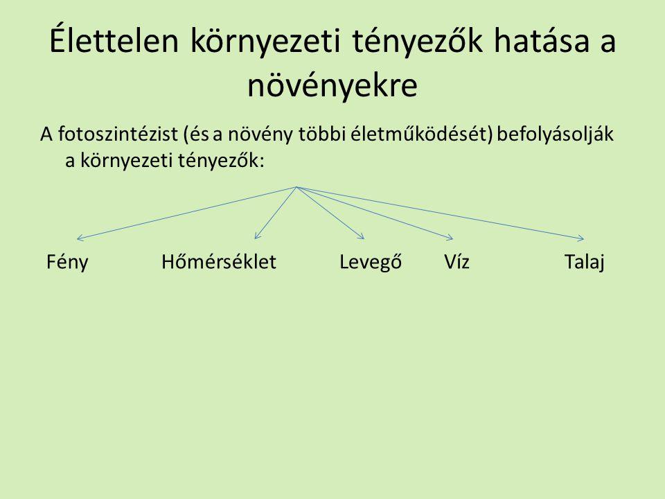 Élettelen környezeti tényezők hatása a növényekre A fotoszintézist (és a növény többi életműködését) befolyásolják a környezeti tényezők: FényHőmérsékletVízLevegőTalaj