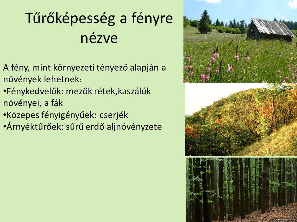 Tűrőképesség a fényre nézve A fény, mint környezeti tényező alapján a növények lehetnek : Fénykedvelők: mezők rétek,kaszálók növényei, a fák Közepes fényigényűek: cserjék Árnyéktűrőek: sűrű erdő aljnövényzete