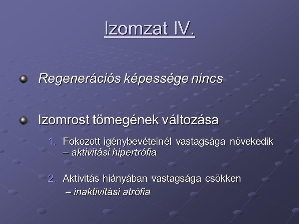 Izomzat IV.