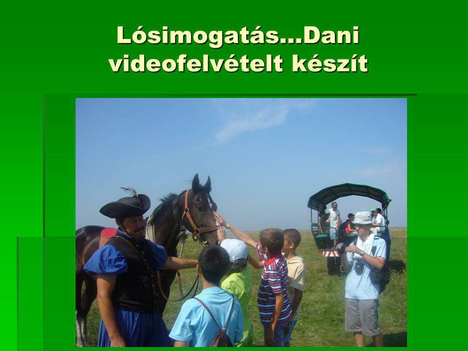 Lósimogatás…Dani videofelvételt készít